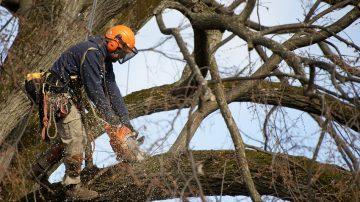 Кронирование и рубка деревьев