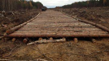 Строительство лежневых дорог
